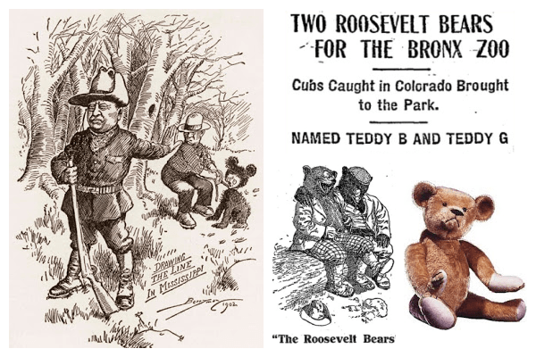 Collage of four images. The first image is of a political cartoon of President Theodore Roosevelt refusing to shoot an injured, old black bear. Two images are of newspaper articles about the bears Teddy--B and Teddy--G. The final image is a photograph of an early teddy bear.